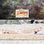 Orange Spotted Prawn Goby (Bonded Pair) with Red Banded Pistol Shrimp (click for more detail)