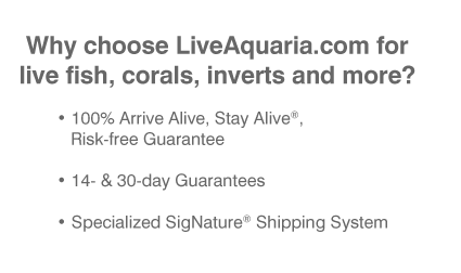 Why choose LiveAquaria.com