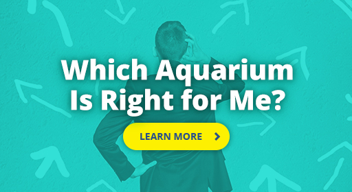 Which Aquarium is right for me?