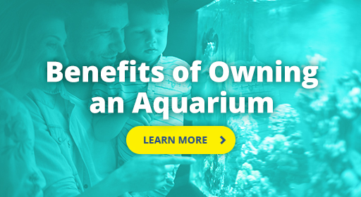 Benefits of owning an aquarium