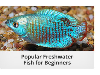 Freshwater Fish for Beginners