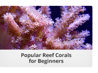 Corals for Beginners