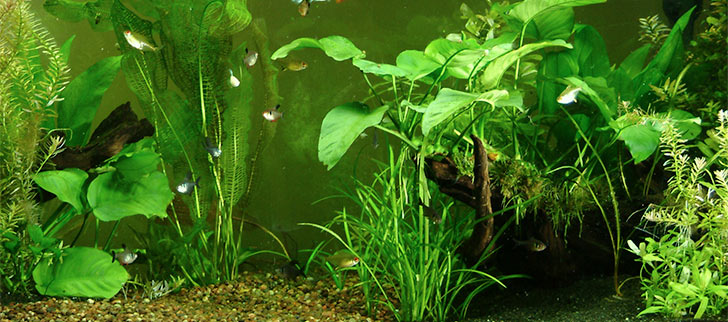 Caring for Your Live Plant Aquarium