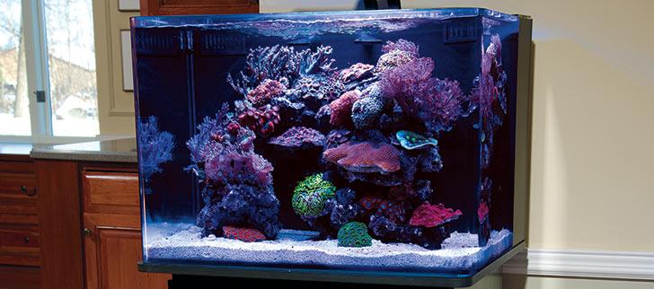 Coral types for home aquarium pictures.