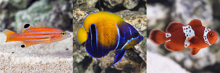Quarantine Procedures for Marine Fish