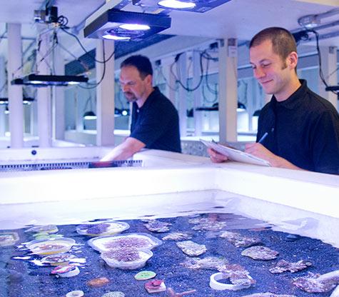 LiveAquaria Coral Farm and Aquatic Life Facility