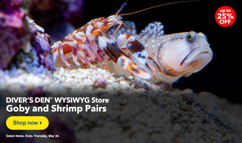 Diver's Den Shrimp/Goby