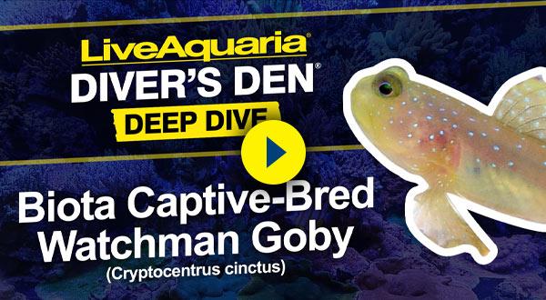 Shrimp/Goby Video