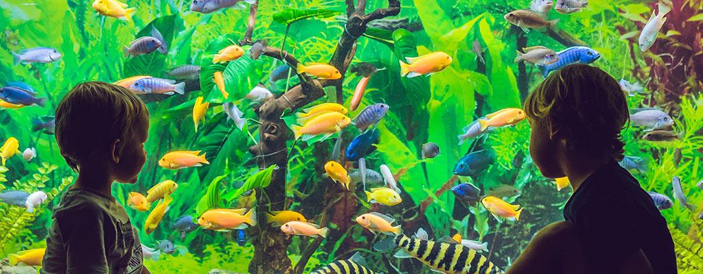 Live Aquarium Setup Aquarium Care And Aquarium Fish Information