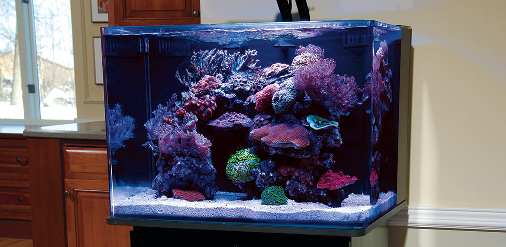 Aquascaping Nano Reef Aquariums: How to Maximize Limited Aquarium Space