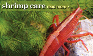 Shrimp Care