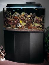 Stocking Your Saltwater Aquarium