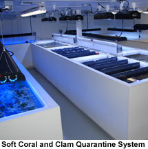 Soft Coral, Polyp, Mushroom, LPS, and Clam Quarantine System