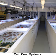 Main Coral Systems