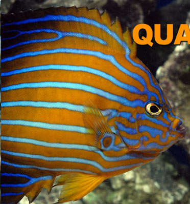 LiveAquaria.com Divers Den? Quarantine Procedure for Fish
