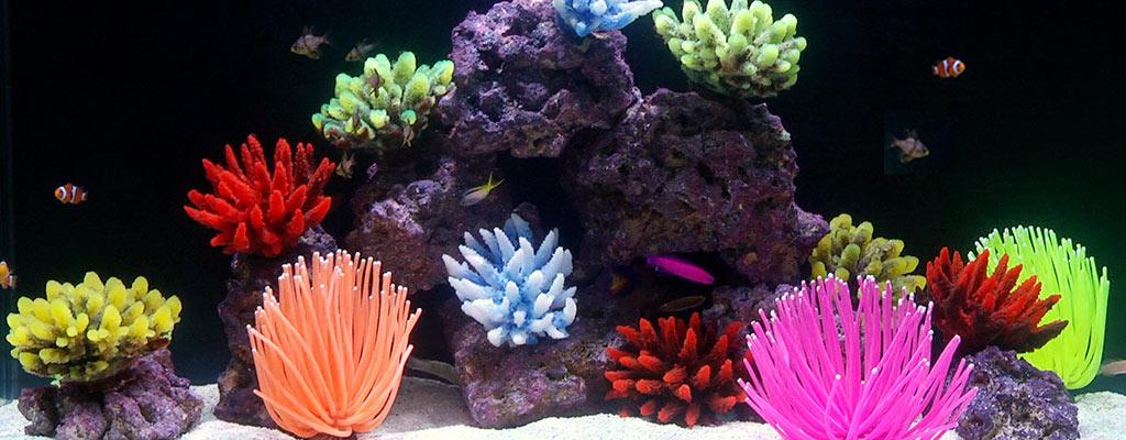 new aquarium setup guide saltwater aquarium basics
