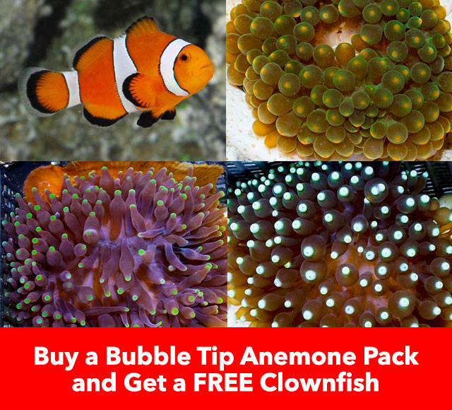 Free Clownfish with Anemone Pack