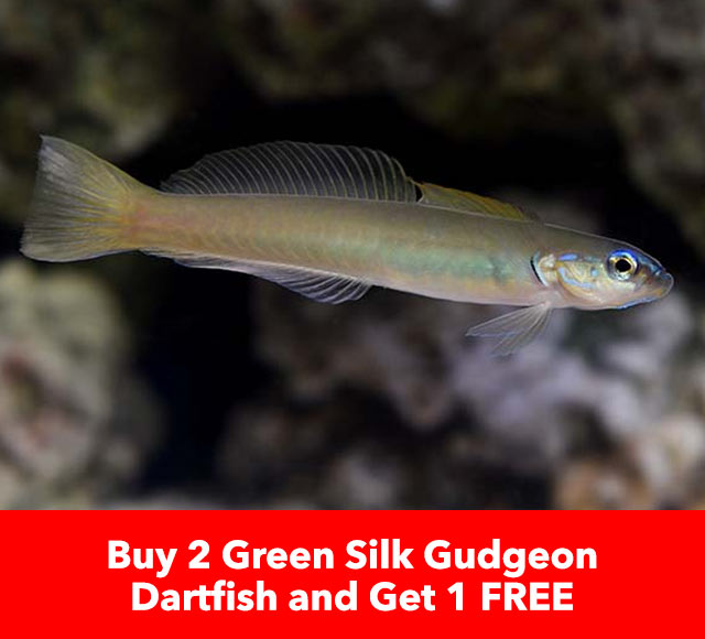 Buy 2 Get 1 Free Green Silk Gudgeon