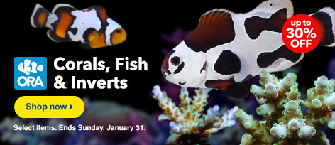 ORA Fish, Coral, and Inverts up to 30% off