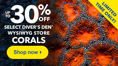 Up to 30% Off Select Diver's Den Corals