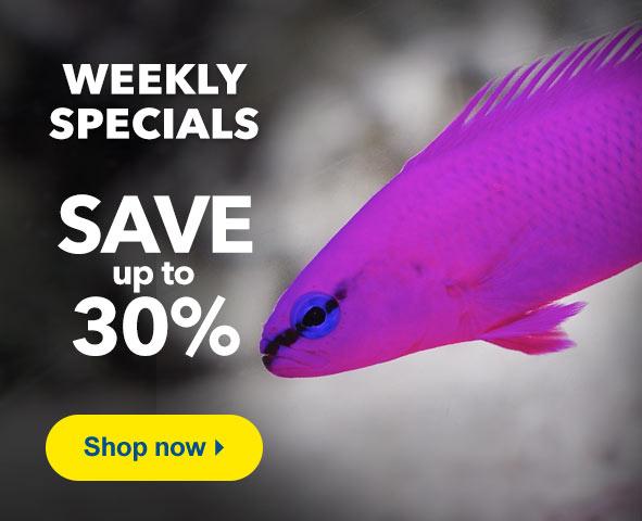 Up to 30% Off Weelky Specials