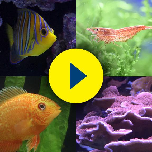 liveaquaria quality aquarium fish supplies equipment