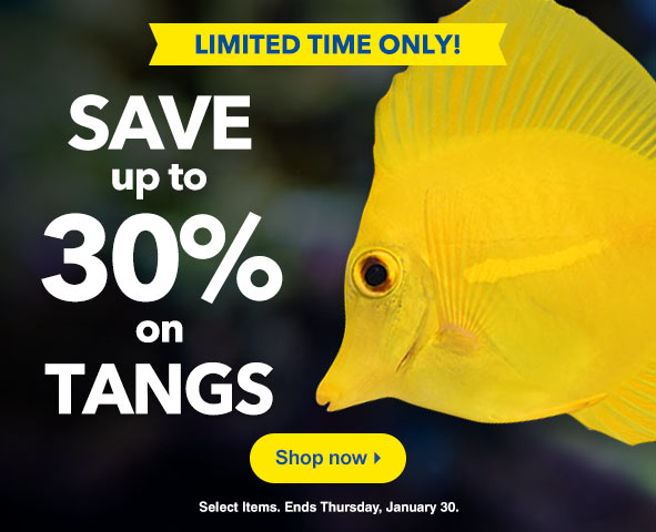 Save up to 30% on Tangs