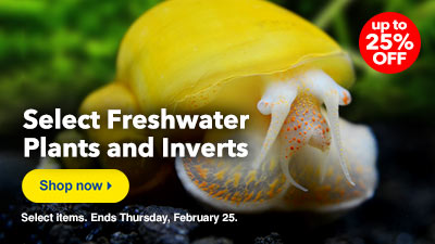 Freshwater Plant and Invert Sale