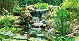 Spring & Summer Pond Care