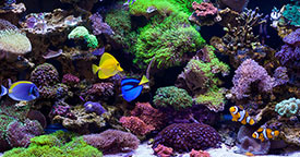 Water Motion in Reef Aquariums
