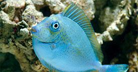 Introducing New Fish into Your Aquarium