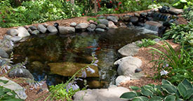 Preparing a Quarantine Area for Pond Fish