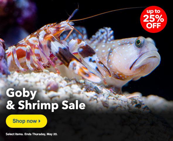 Shrimp Goby Sale