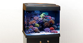 A Closer Look at Nano Reef Aquariums