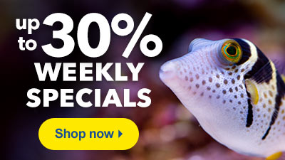 Up to 30% Off Weekly Specials