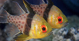 Popular Saltwater Fish for Beginners