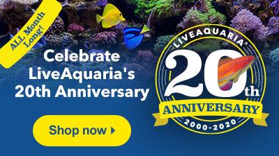 Shop Anniversary Specials