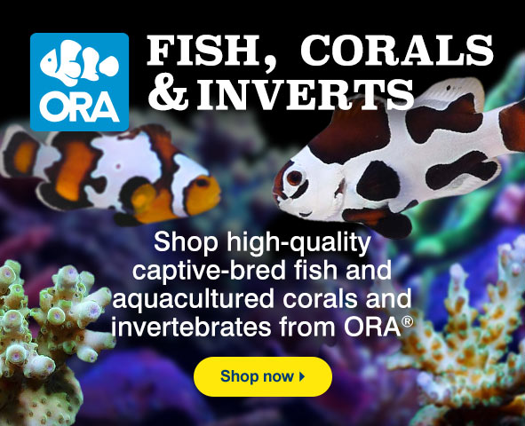 ORA Fish, Corals, and Inverts