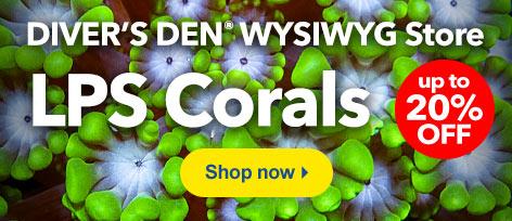 Diver's Den WYSIWYG Store LPS Corals