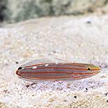 Captive-Bred Fish