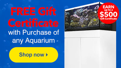Free Gift Certificate with Aquarium Purchase