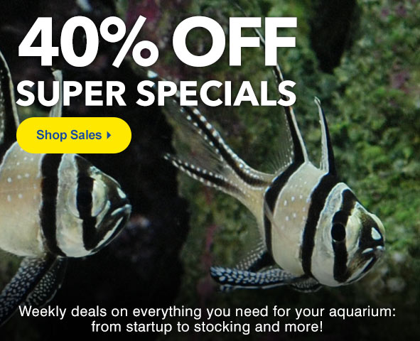 Shop Super Specials up to 40% Off