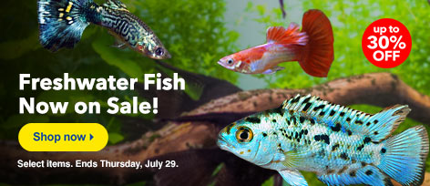 Freshwater Fish Sale