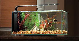 Upgrading Your Starter Aquarium