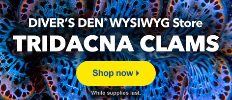 Diver's Den WYSIWYG Store Tridacna Clams