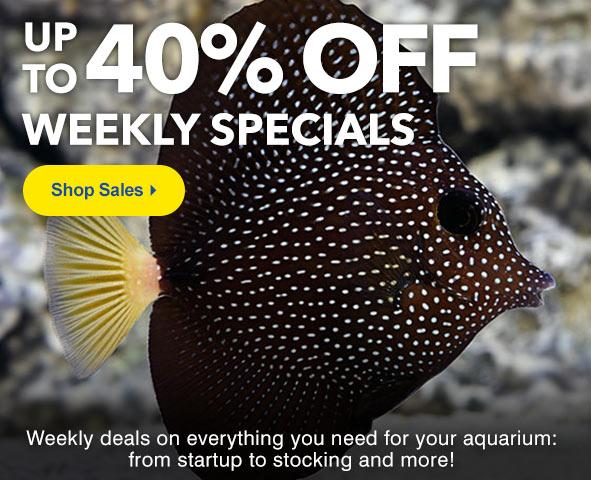 Super Specials up to 40% Off