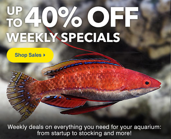 Super Specials up to 40% Off
