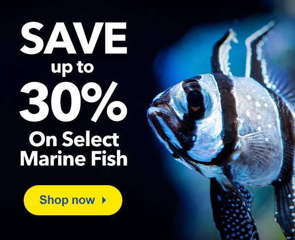 LiveAquaria   Quality Aquarium Fish, Supplies & Equipment