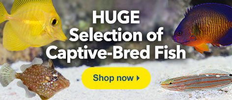 Captive Bred Fish