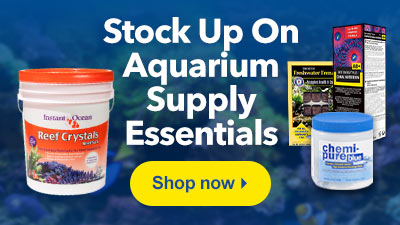 Stock Up on Supply Essentials